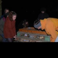 Bee and insect hotel building