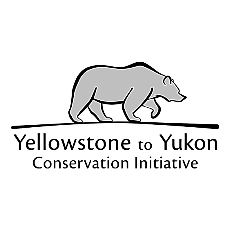 Conservation Intern at Yellowstone to Yukon